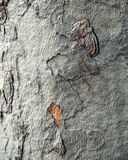 Macro image d'écorce d'arbre images libres de droits