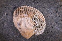 Macro image d'un coquillage photo stock