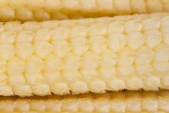 Macro de maïs de bébé Photographie stock libre de droits