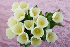 Macro image des pétales de tulipe image stock