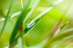 Macro image of drop on the grass, small depth of field. Royalty Free Stock Photos