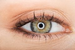 Macro image of female eye Stock Photography