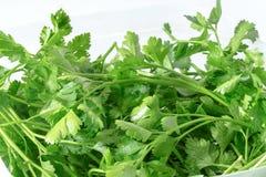Macro image of Fresh parsley bunch on white background.  stock image