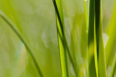 Macro image of green grass background Stock Photo