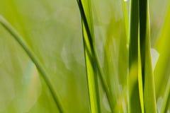 Macro image of green grass background Stock Photo