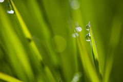 Macro image of green grass background Royalty Free Stock Photos