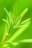 Macro image of green plant Royalty Free Stock Photos