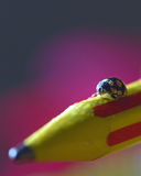 Macro image of a lady bug Royalty Free Stock Images