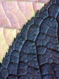 Macro image of leaf texture Royalty Free Stock Images