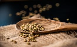 Lentil seeds in a wooden spoon Stock Image