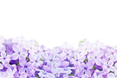 Macro image of lilac violet flowers Stock Photo