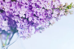 Macro image of lilac violet flowers Royalty Free Stock Photography