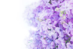 Macro image of lilac violet flowers Royalty Free Stock Images