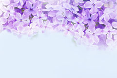 Macro image of lilac violet flowers Stock Image