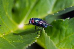 Macro image of little fly stock images