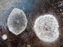 Macro image of a mold Stock Photos