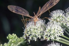 Macro image of mosquitoes on plant royalty free stock photos