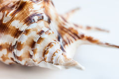 Macro Image Of Sea Shell Royalty Free Stock Image