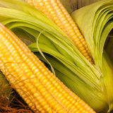 Macro image of corn cobs Stock Photos