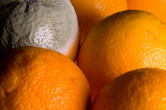 Macro image of orange with mold Stock Images