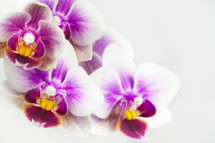 Macro image of orchid flower, captured with a small depth of field. royalty free stock photography