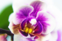 Macro image of orchid flower, captured with a small depth of field. stock photo