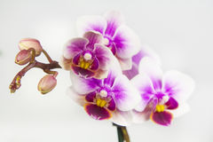 Macro image of orchid flower, captured with a small depth of field. stock photos