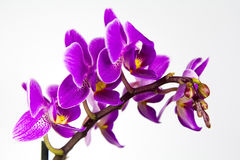 Macro image of orchid flower, captured with a small depth of field. Stock Images