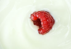 Macro image of raspberry fruit in yogurt Royalty Free Stock Images