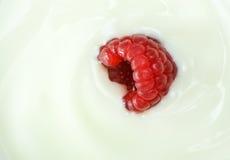 Macro image of raspberry fruit in yogurt Royalty Free Stock Images