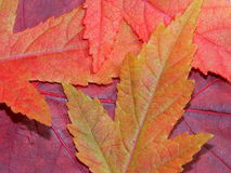 Macro image of red leaves Stock Photo
