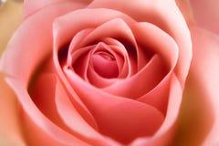 Macro image of rose royalty free stock photography
