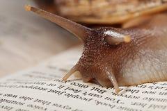 Macro image of snail crawling on book Royalty Free Stock Photos