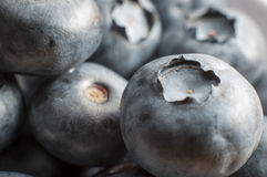 Macro image of some blueberries. Macro image of a bunch of blueberries Stock Photos