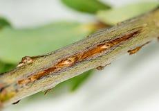 Macro image of tree damage from cicada Stock Photos