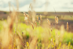 Macro image of wild grasses in a field