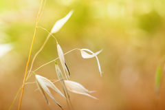 Macro image of wild plants. Royalty Free Stock Images