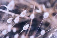 Macro image of wild plants. Small depth of field. Vintage filter Stock Photos