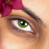 Macro image of woman eye Stock Images