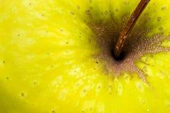 Macro Image of a Yellow Apple Stalk. Closeup Macro image of a yellow apple stalk and stem Royalty Free Stock Photos