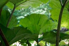 Macro immagine al di sotto delle foglie immagine stock