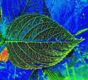 Macro immagine artistica della foglia verde trasparente soleggiata dell'albero fotografie stock