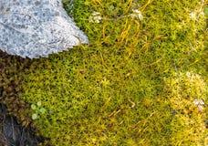 Macro immagine del fondo della vegetazione Fotografia Stock