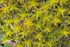 Macro immagine del fondo della vegetazione Fotografie Stock Libere da Diritti