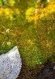 Macro immagine del fondo della vegetazione Immagini Stock