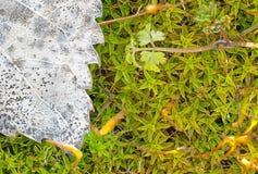Macro immagine del fondo della vegetazione Immagine Stock