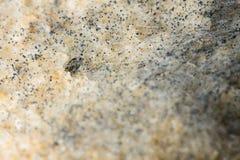 Macro immagine della muffa su un pane Immagini Stock