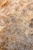 Macro immagine della muffa su un pane Fotografia Stock Libera da Diritti