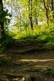 Macro immagine della terra di una foresta la foglia asciutta del faggio nella priorità alta e nelle parti di una radice Fotografie Stock