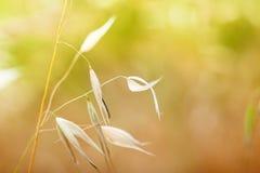 Macro immagine delle piante selvatiche Immagini Stock Libere da Diritti